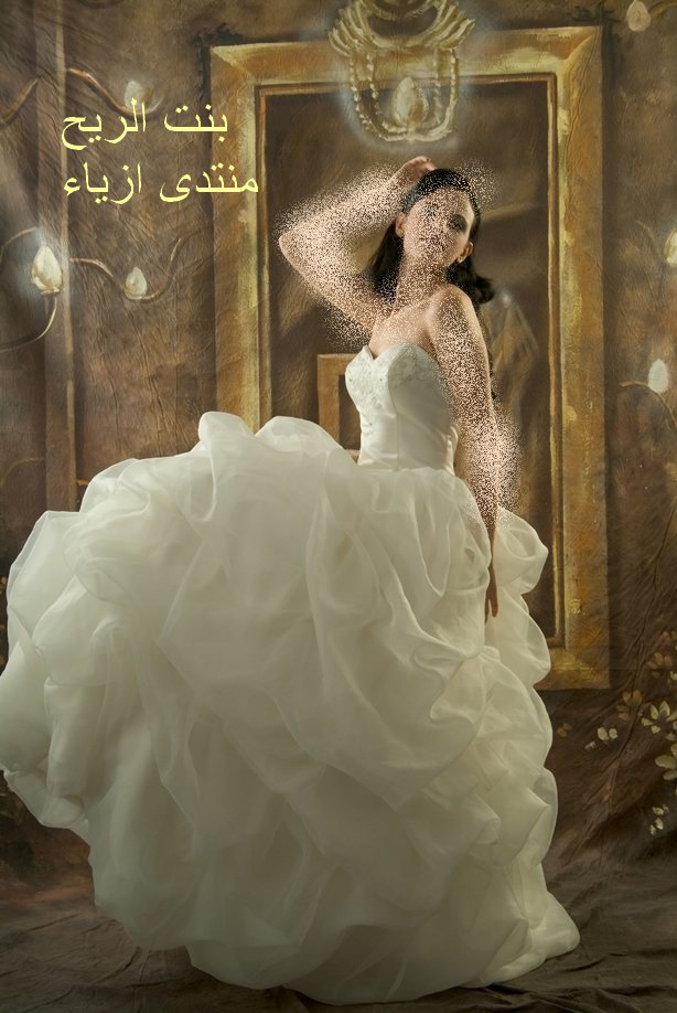 فساتين زفاف , فساتين زفاف جديدة new_1451746003_551.j