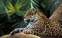 الصورة الرمزية black tiger